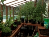 Interior of lean-to greenhouse