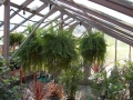 Interior of the large greenhouse