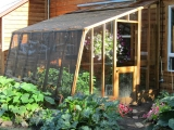 Redwood lean-to greenhouse with dutch door
