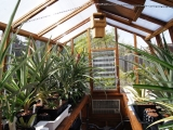Interior of pineapple growing greenhouse