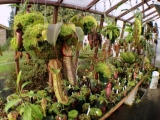 Interior of redwood greenhouse with carnivorous plants