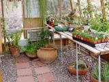 Desert greenhouse interior