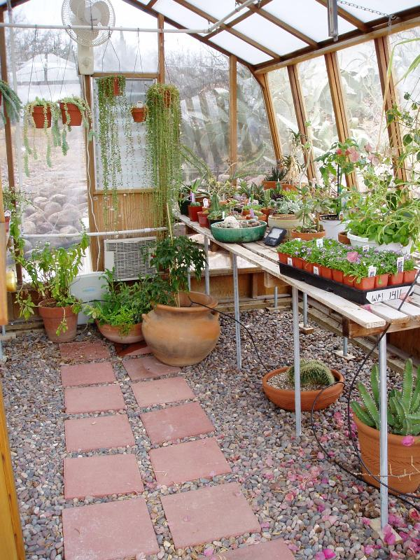 Desert greenhouse interior
