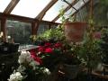 7 x 9 Trillium home greenhouse interior