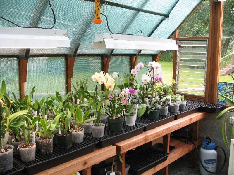 Tudor greenhouse interior with orchids