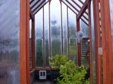 Lemon trees in a redwood greenhouse