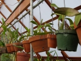 Interior of orchid greenhouse