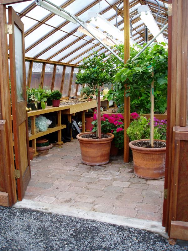 Interior of large sized greenhouse
