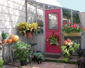 Redwood lean-to greenhouse stained gray