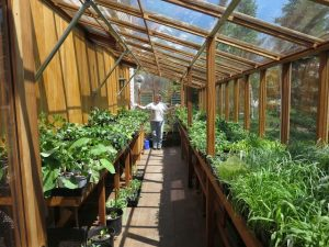 Interior of greenhouse full of plants