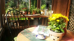 autumn tea in the greenhouse